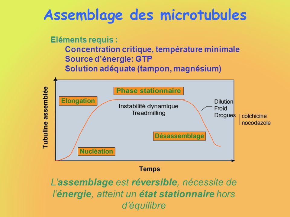 Assemblage des microtubules