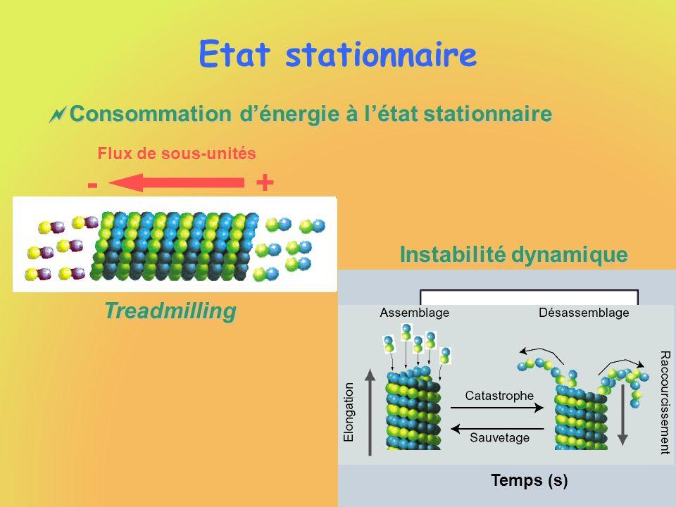 Etat stationnaire + - Consommation d'énergie à l'état stationnaire