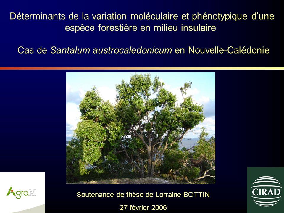 Cas de Santalum austrocaledonicum en Nouvelle-Calédonie