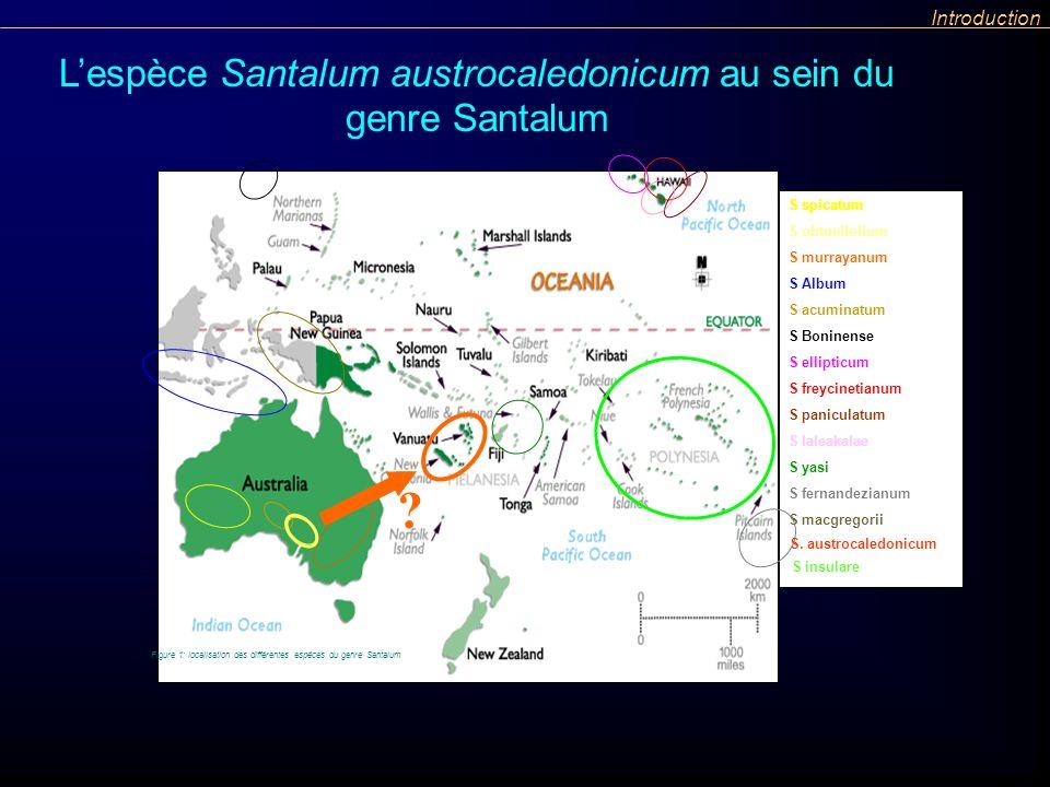 L'espèce Santalum austrocaledonicum au sein du genre Santalum