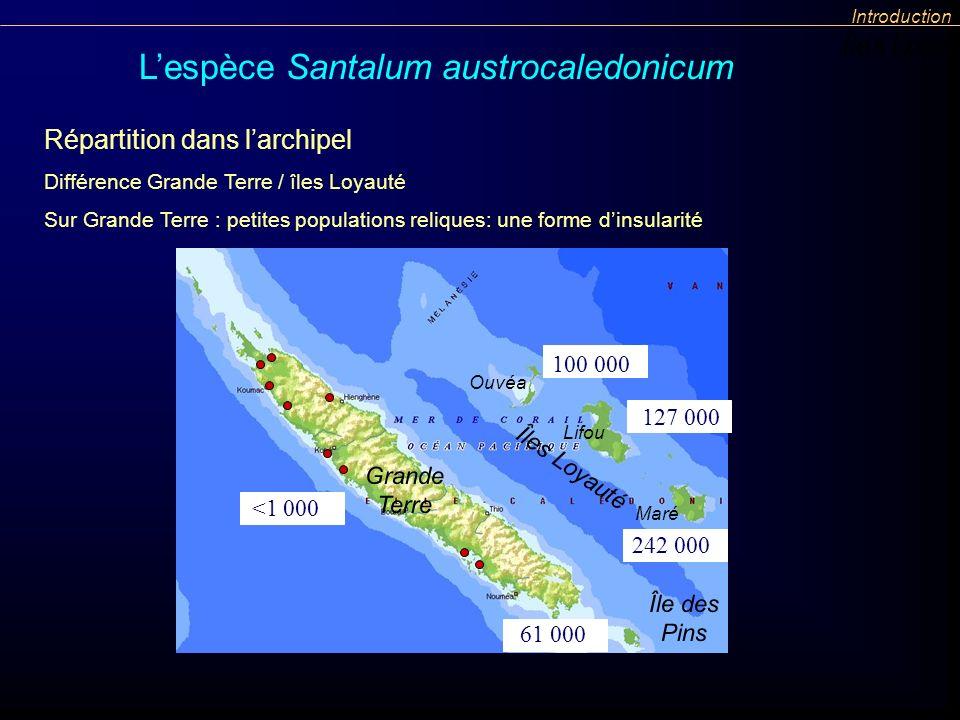 L'espèce Santalum austrocaledonicum