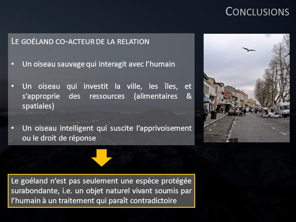 Conclusions Le goéland co-acteur de la relation