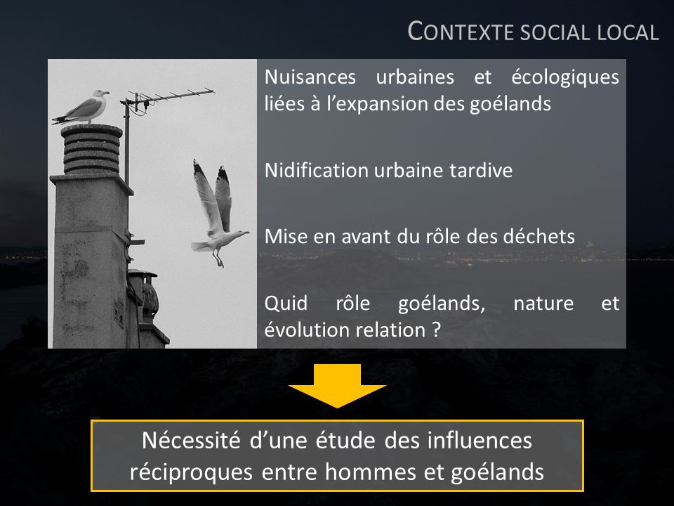 Contexte social local Nuisances urbaines et écologiques liées à l'expansion des goélands. Nidification urbaine tardive.