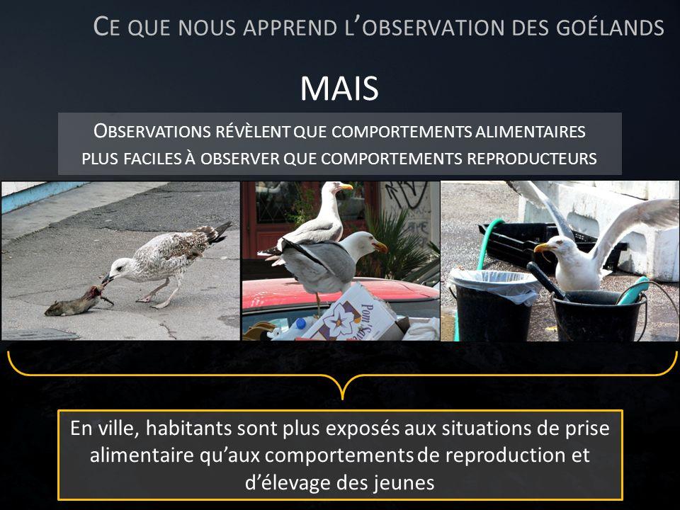 Ce que nous apprend l'observation des goélands