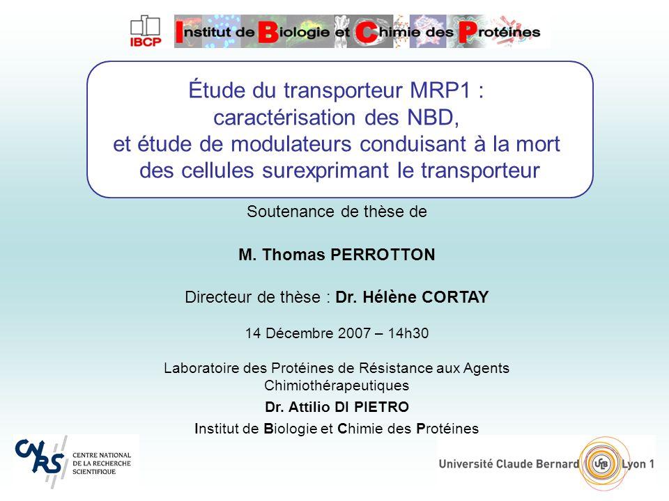 Étude du transporteur MRP1 : caractérisation des NBD,