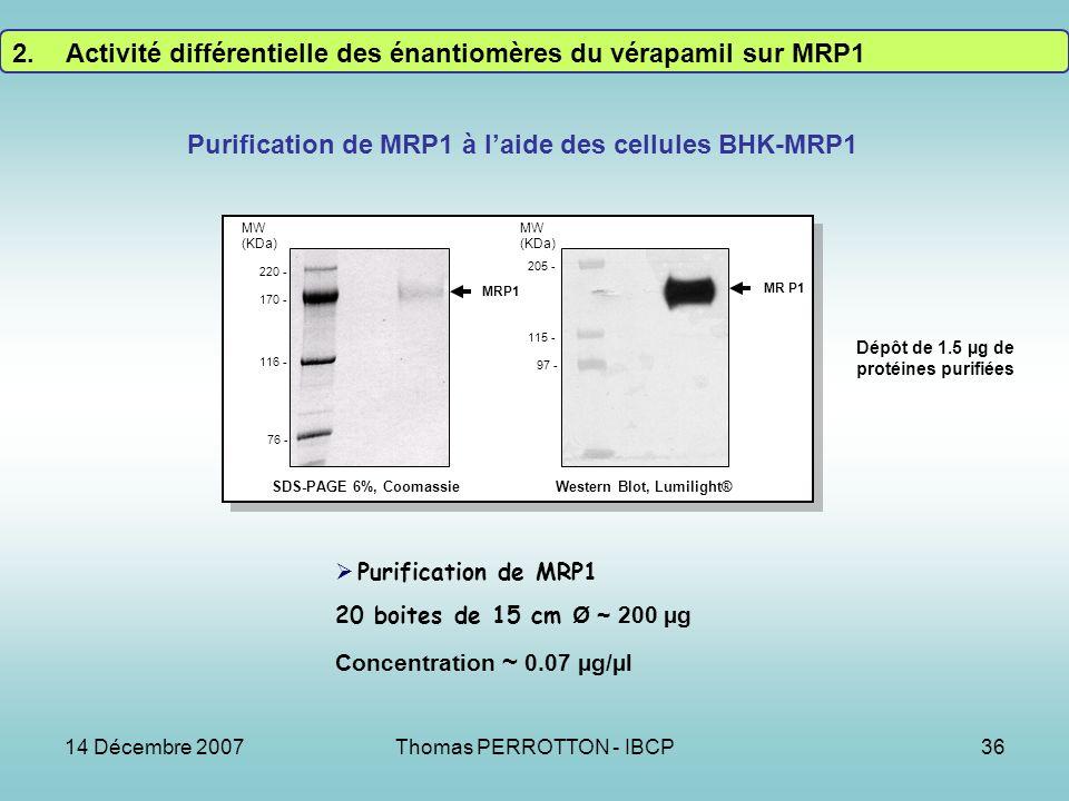 Purification de MRP1 à l'aide des cellules BHK-MRP1