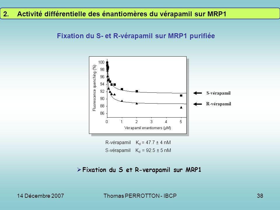 Fixation du S- et R-vérapamil sur MRP1 purifiée