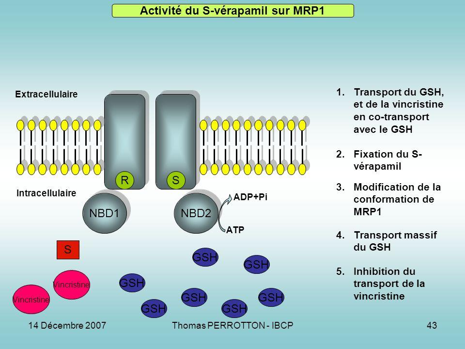 Activité du S-vérapamil sur MRP1