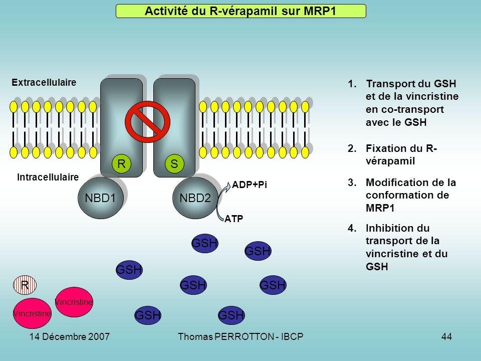 Activité du R-vérapamil sur MRP1