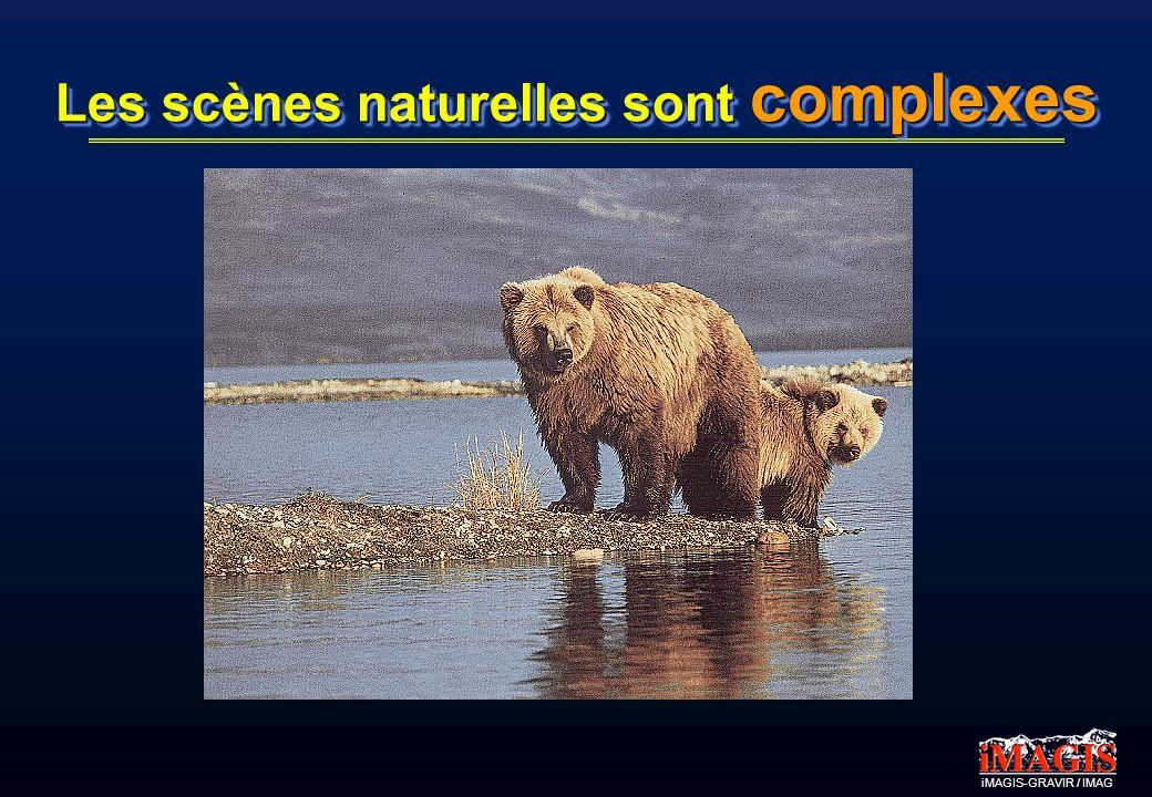 Les scènes naturelles sont complexes