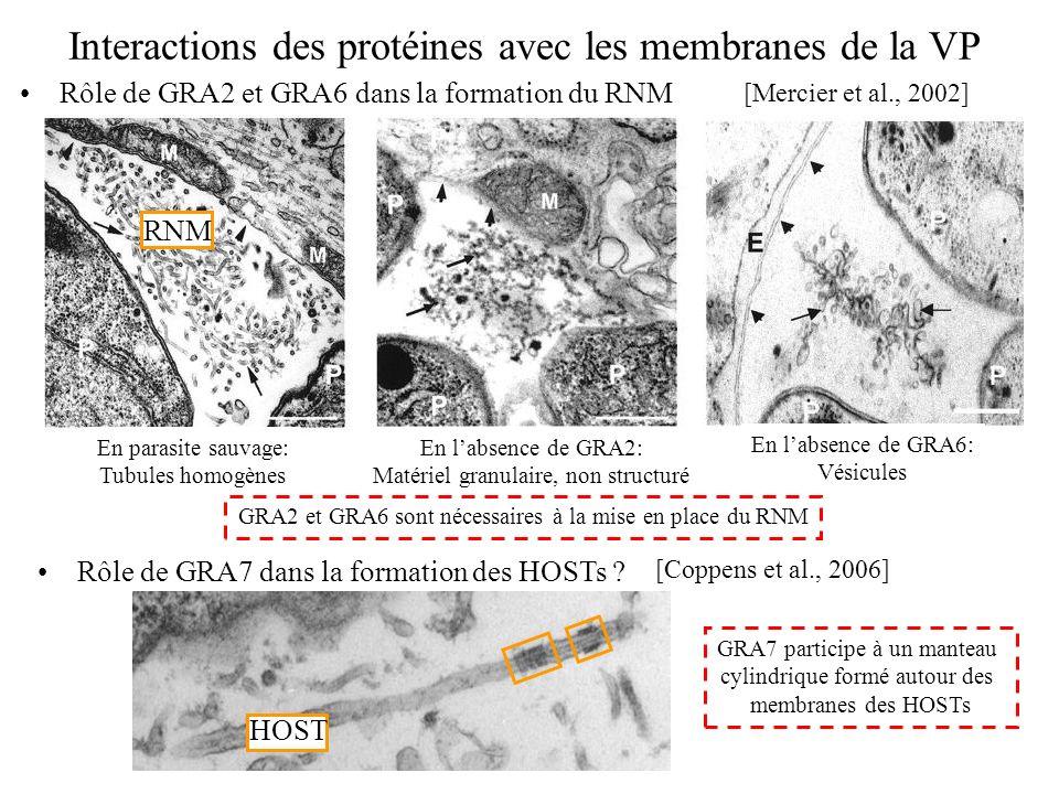 Interactions des protéines avec les membranes de la VP