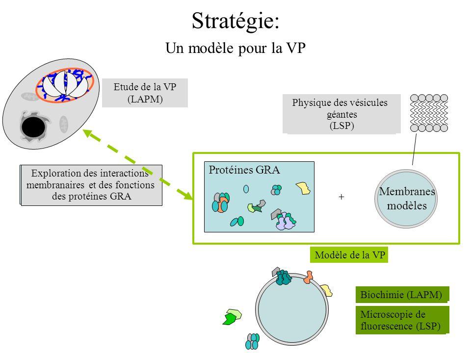 Stratégie: Un modèle pour la VP Protéines GRA Membranes modèles