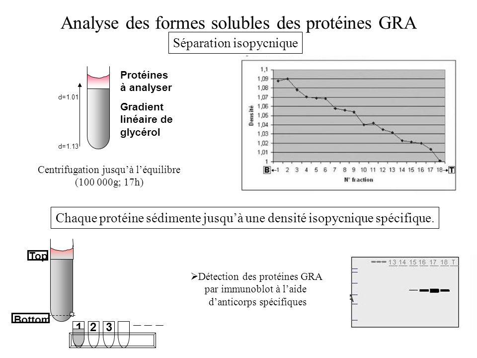Analyse des formes solubles des protéines GRA