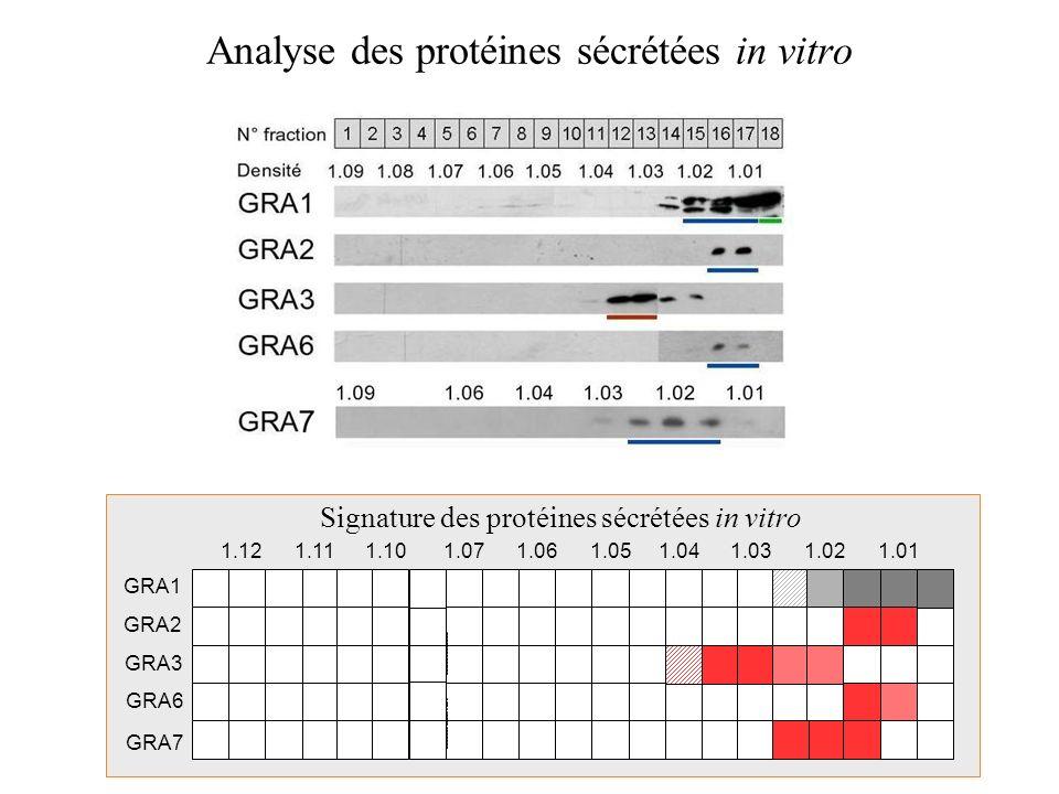 Analyse des protéines sécrétées in vitro