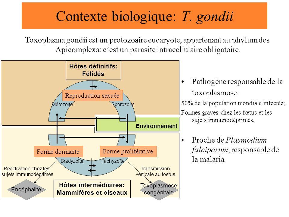 Contexte biologique: T. gondii