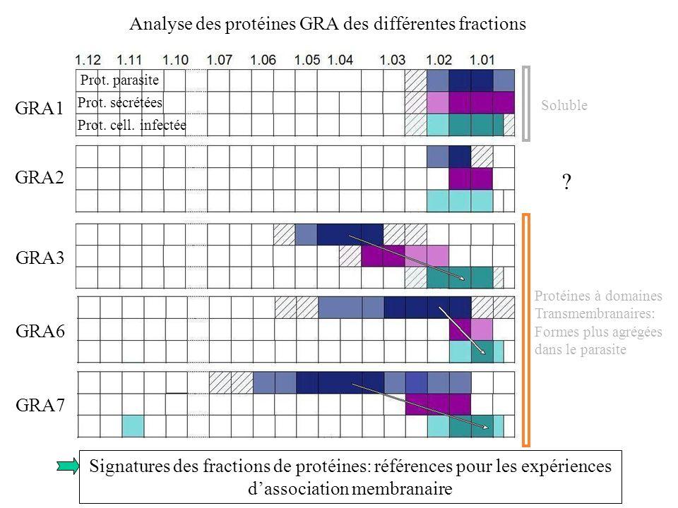 Analyse des protéines GRA des différentes fractions