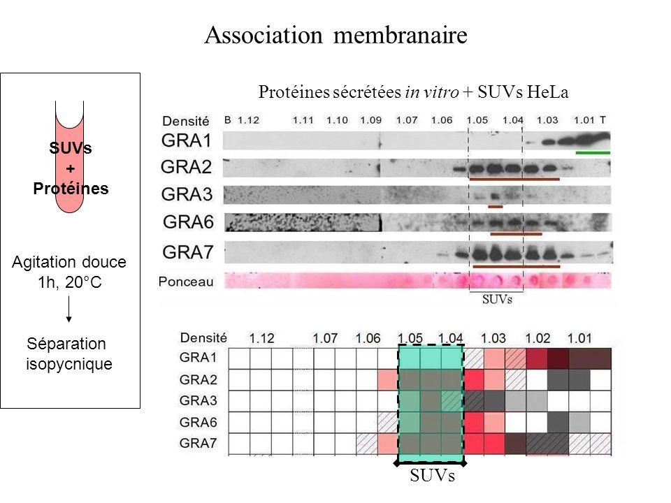 Association membranaire