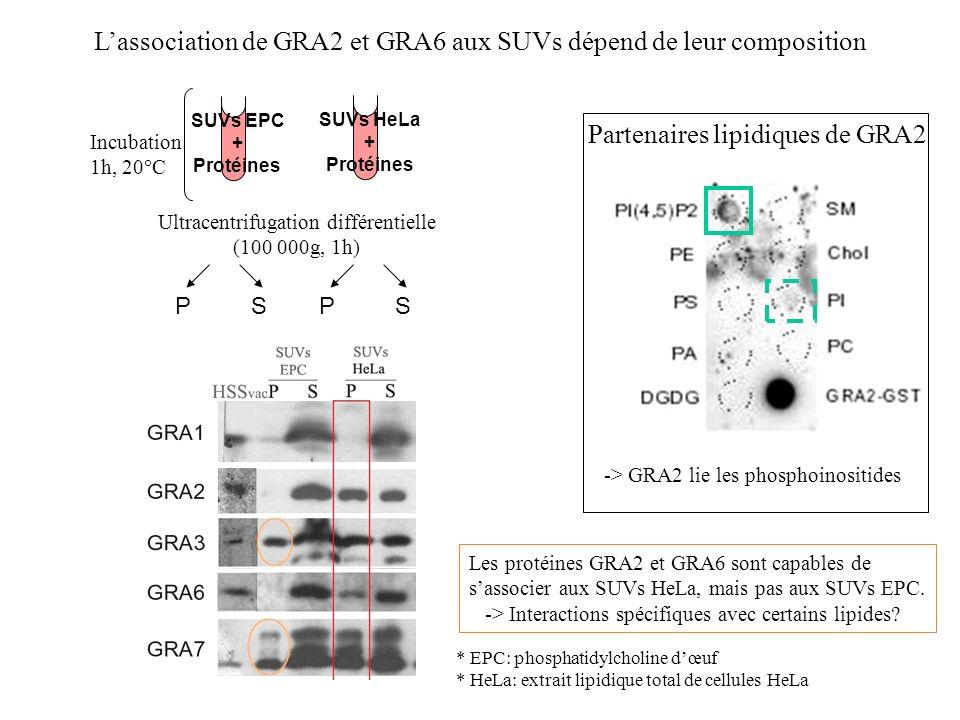 L'association de GRA2 et GRA6 aux SUVs dépend de leur composition