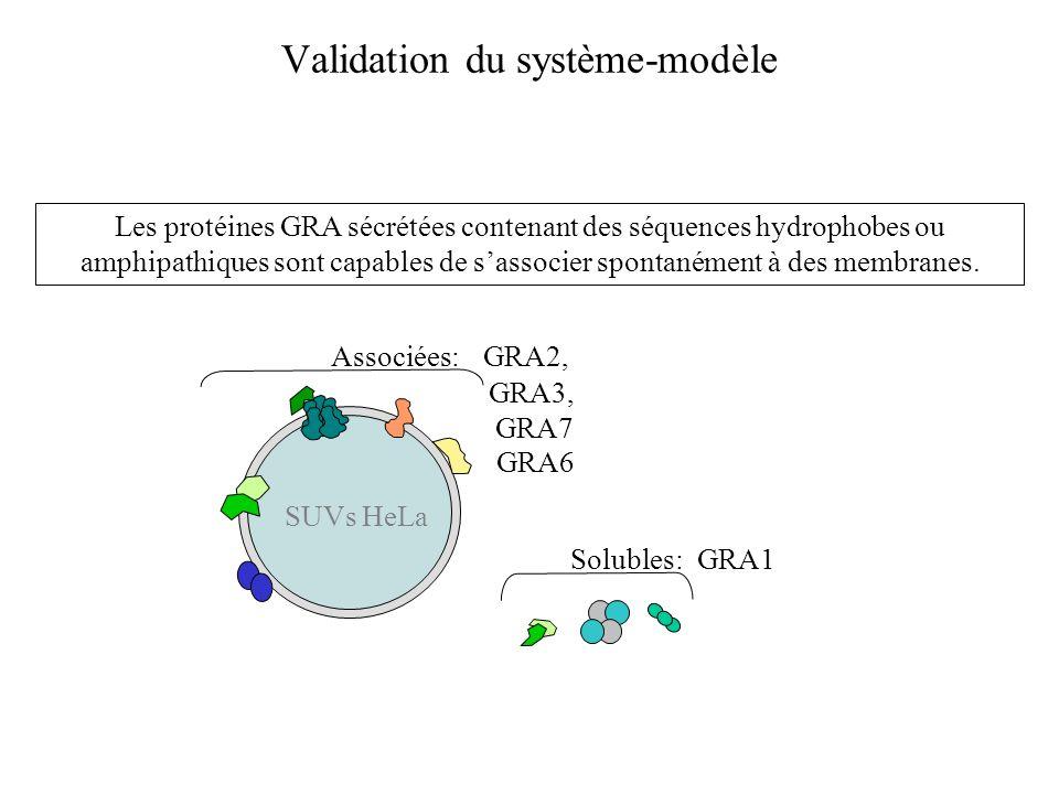 Validation du système-modèle