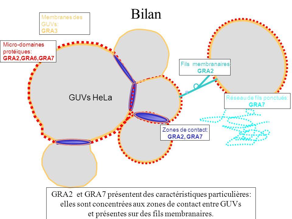 Bilan Membranes des GUVs: GRA3. Micro-domaines protéiques: GRA2,GRA6,GRA7. Fils membranaires: GRA2.
