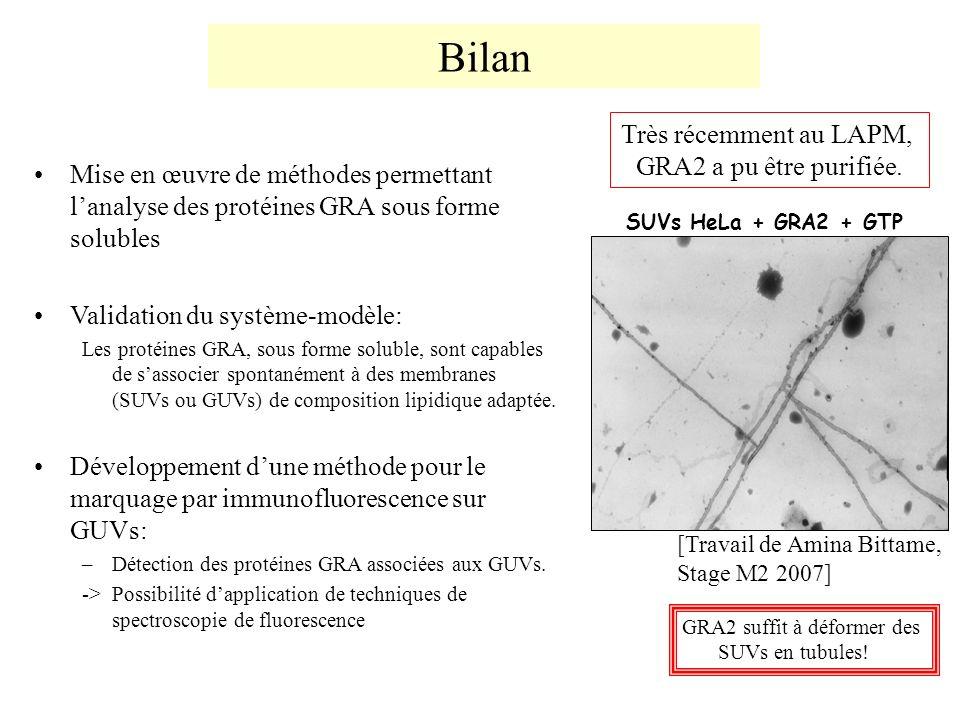 Bilan Très récemment au LAPM, GRA2 a pu être purifiée.