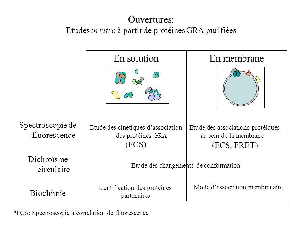 Ouvertures: Etudes in vitro à partir de protéines GRA purifiées
