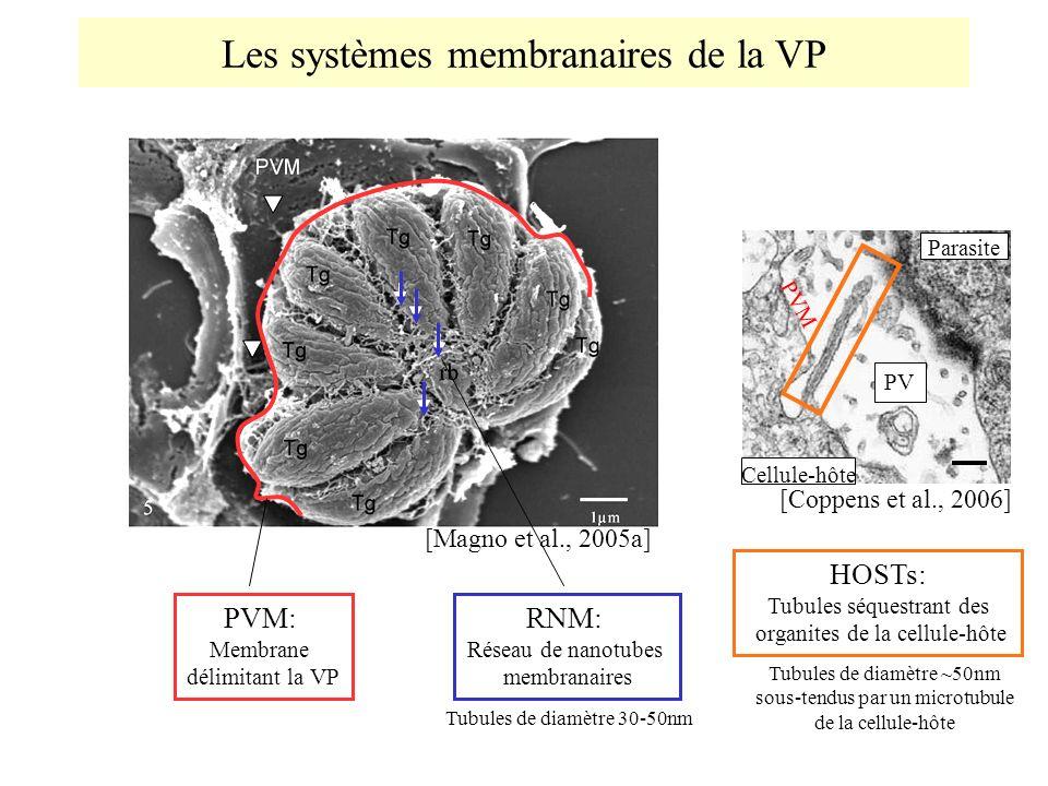 Les systèmes membranaires de la VP