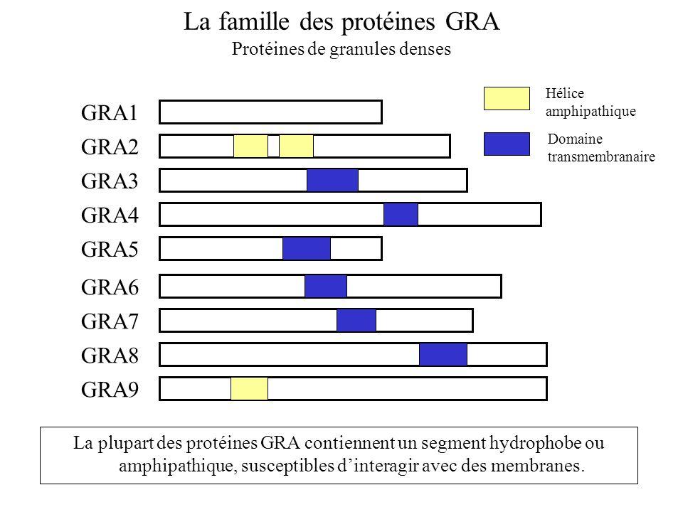 La famille des protéines GRA
