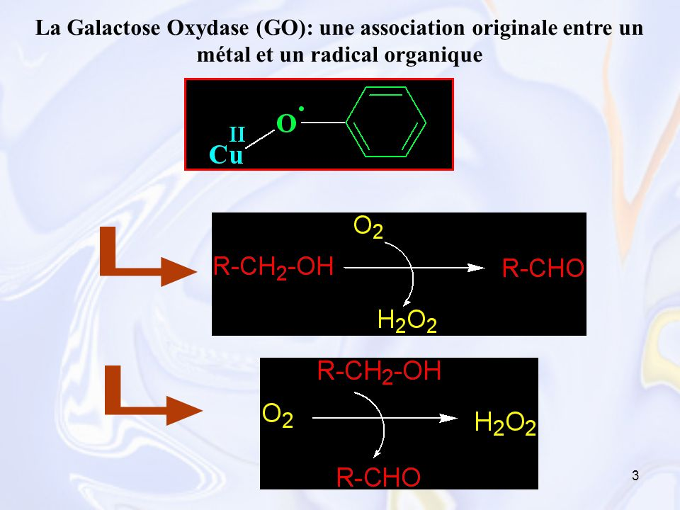 La Galactose Oxydase (GO): une association originale entre un métal et un radical organique