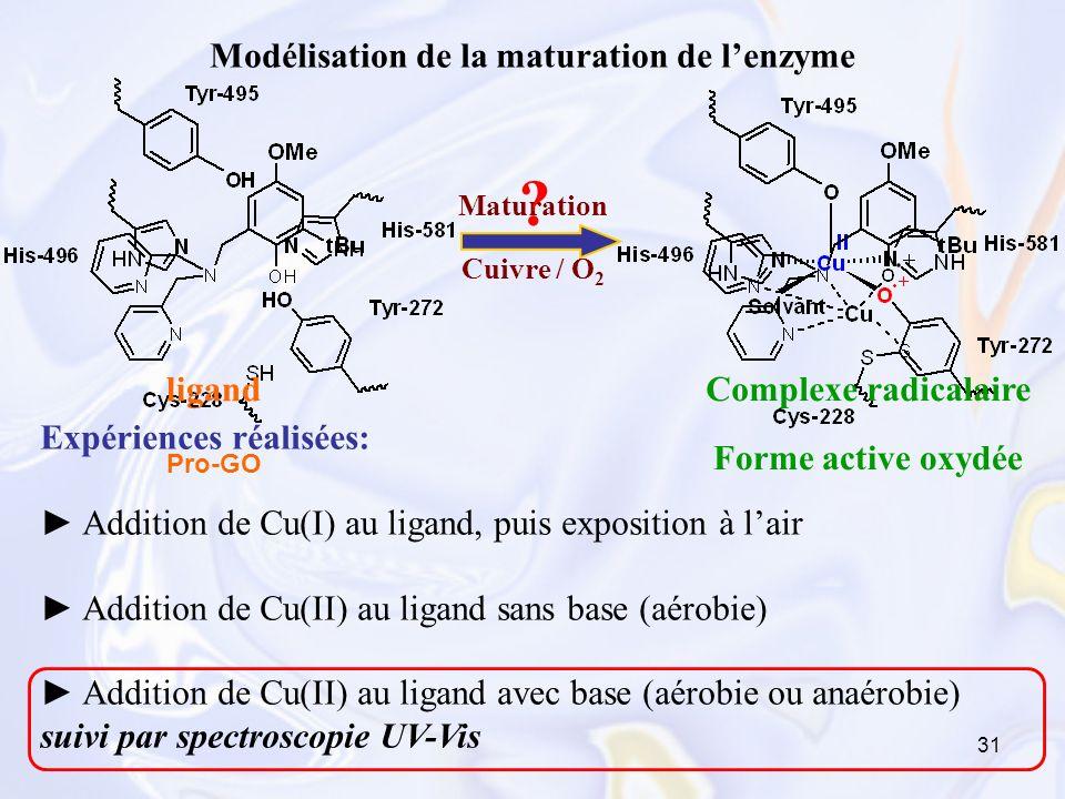Modélisation de la maturation de l'enzyme