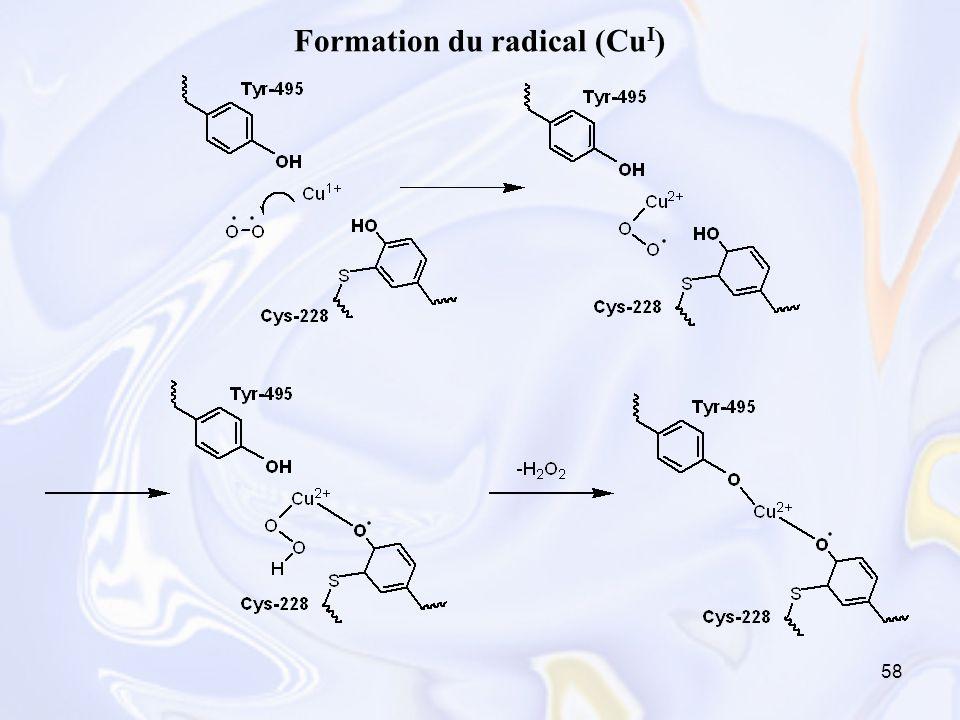 Formation du radical (CuI)