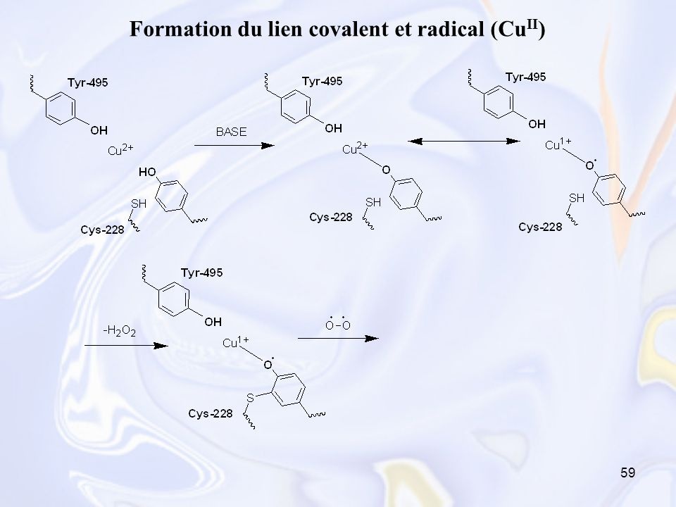 Formation du lien covalent et radical (CuII)