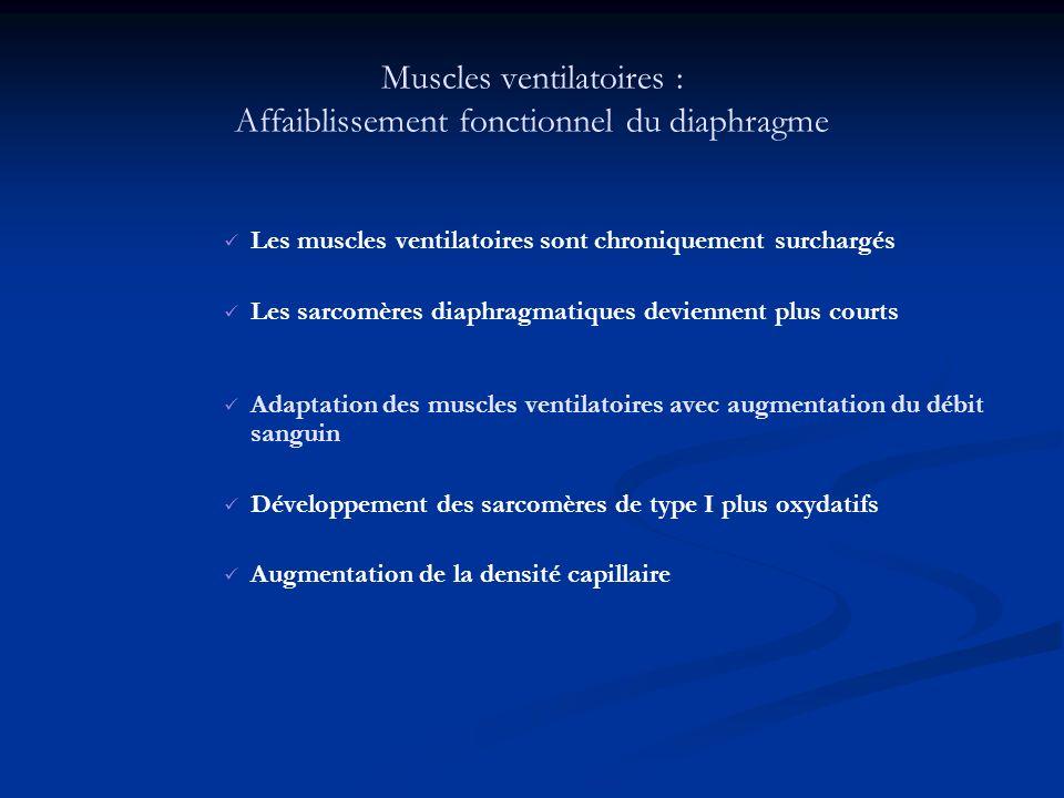 Muscles ventilatoires : Affaiblissement fonctionnel du diaphragme