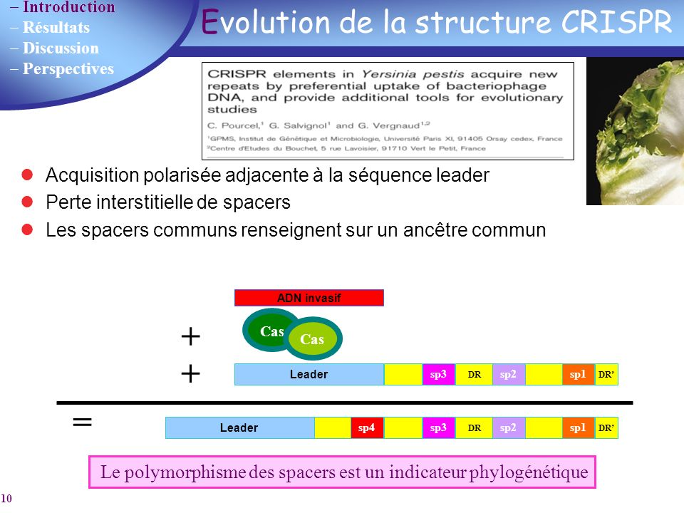 Evolution de la structure CRISPR