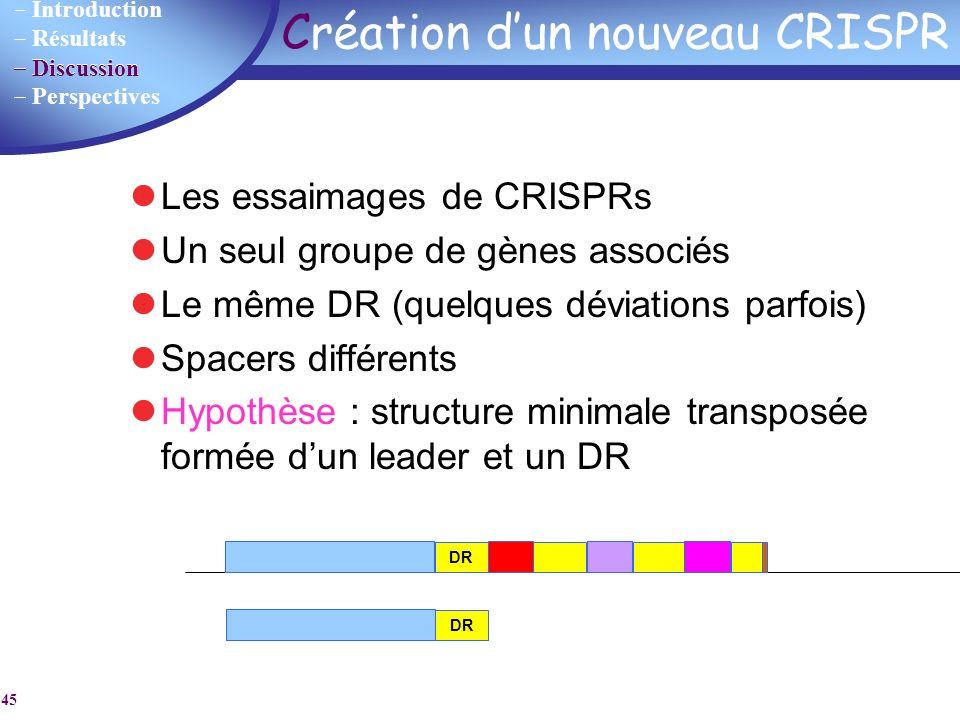 Création d'un nouveau CRISPR