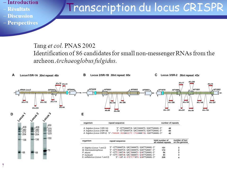 Transcription du locus CRISPR