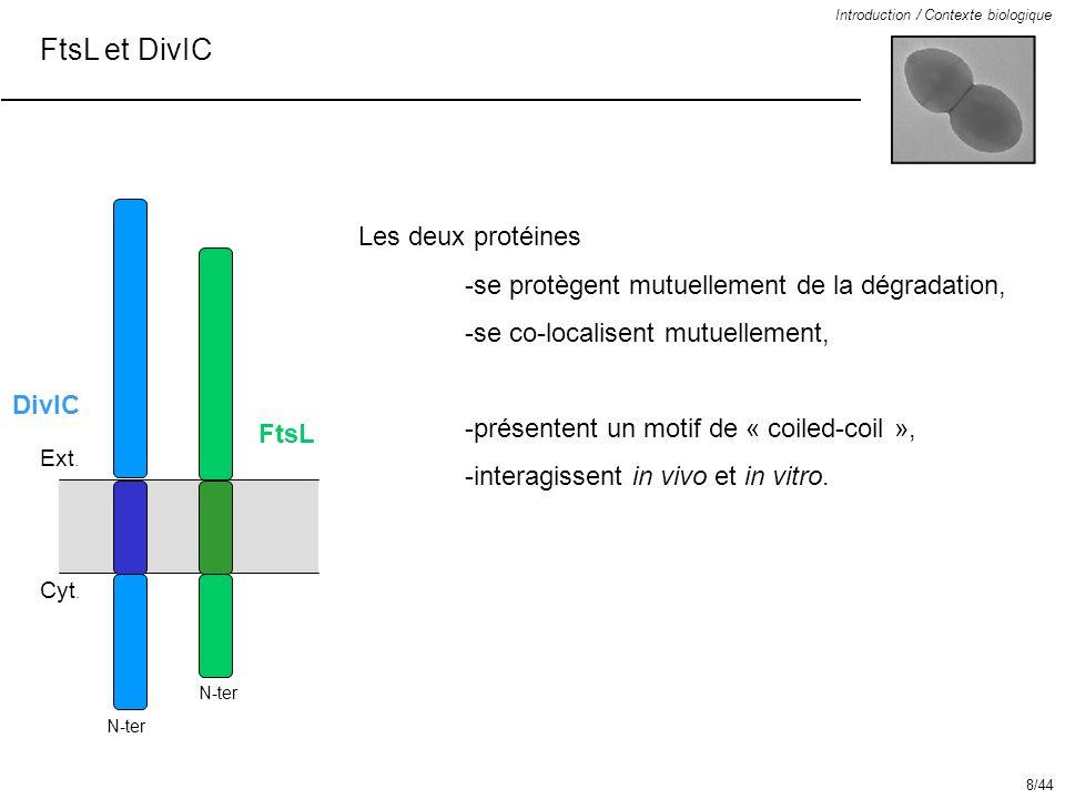 FtsL et DivIC Les deux protéines