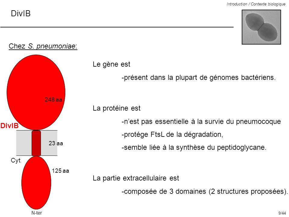 DivIB Chez S. pneumoniae: Le gène est