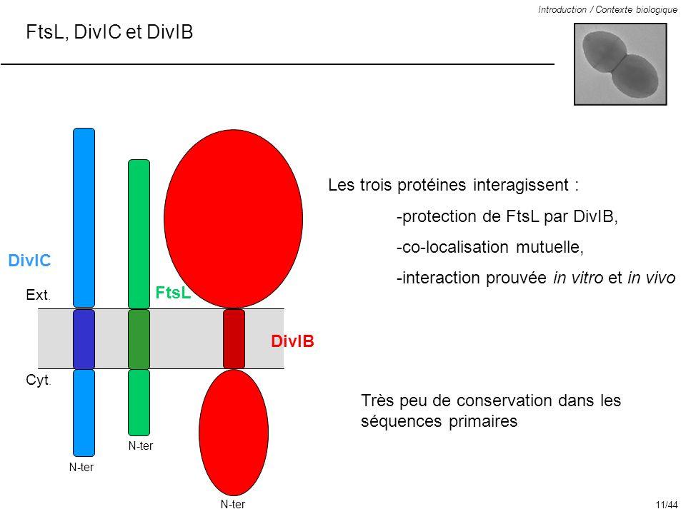 FtsL, DivIC et DivIB Les trois protéines interagissent :