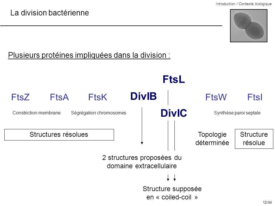 FtsL DivIB DivIC FtsZ FtsA FtsK FtsW FtsI La division bactérienne