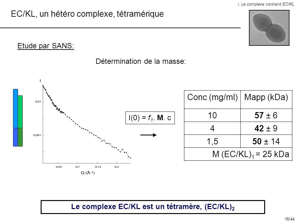 Le complexe EC/KL est un tétramère, (EC/KL)2