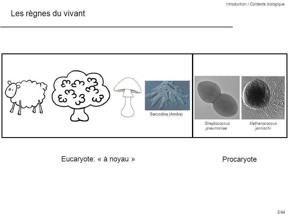 Les règnes du vivant Eucaryote: « à noyau » Procaryote