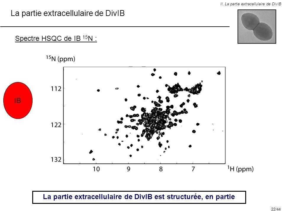 La partie extracellulaire de DivIB est structurée, en partie