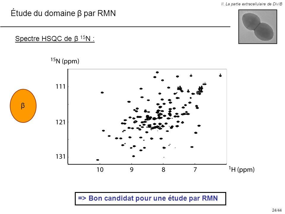 Étude du domaine β par RMN