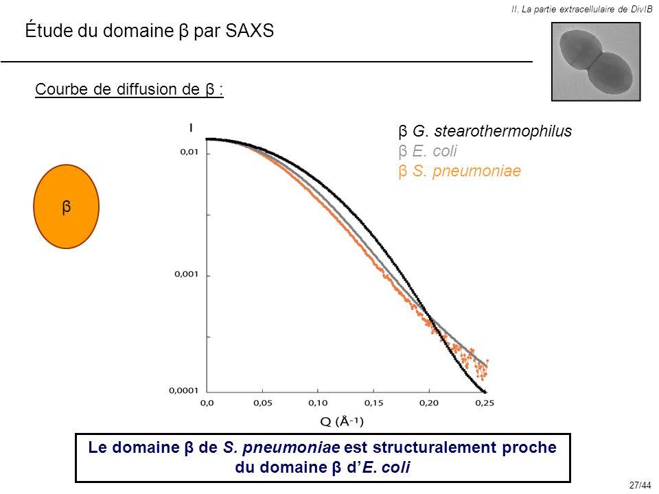 Étude du domaine β par SAXS