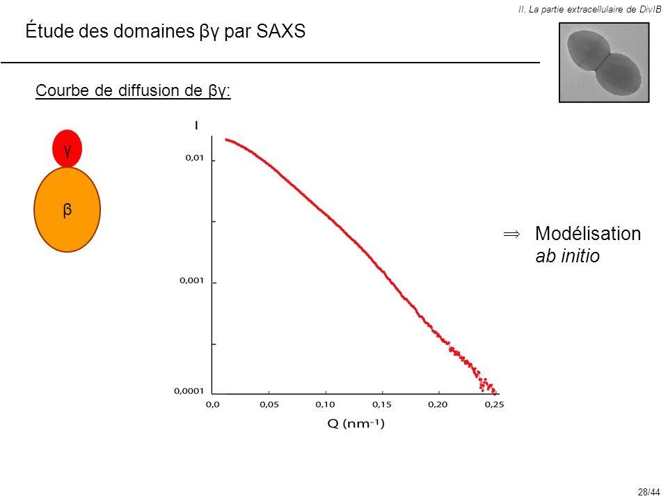 Étude des domaines βγ par SAXS
