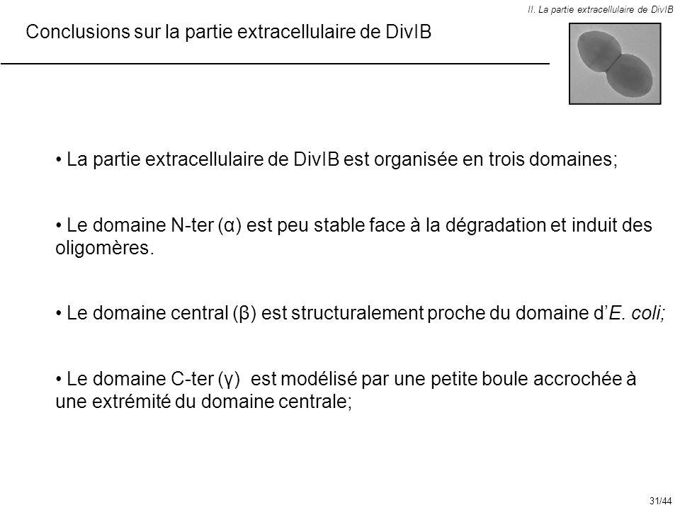 Conclusions sur la partie extracellulaire de DivIB