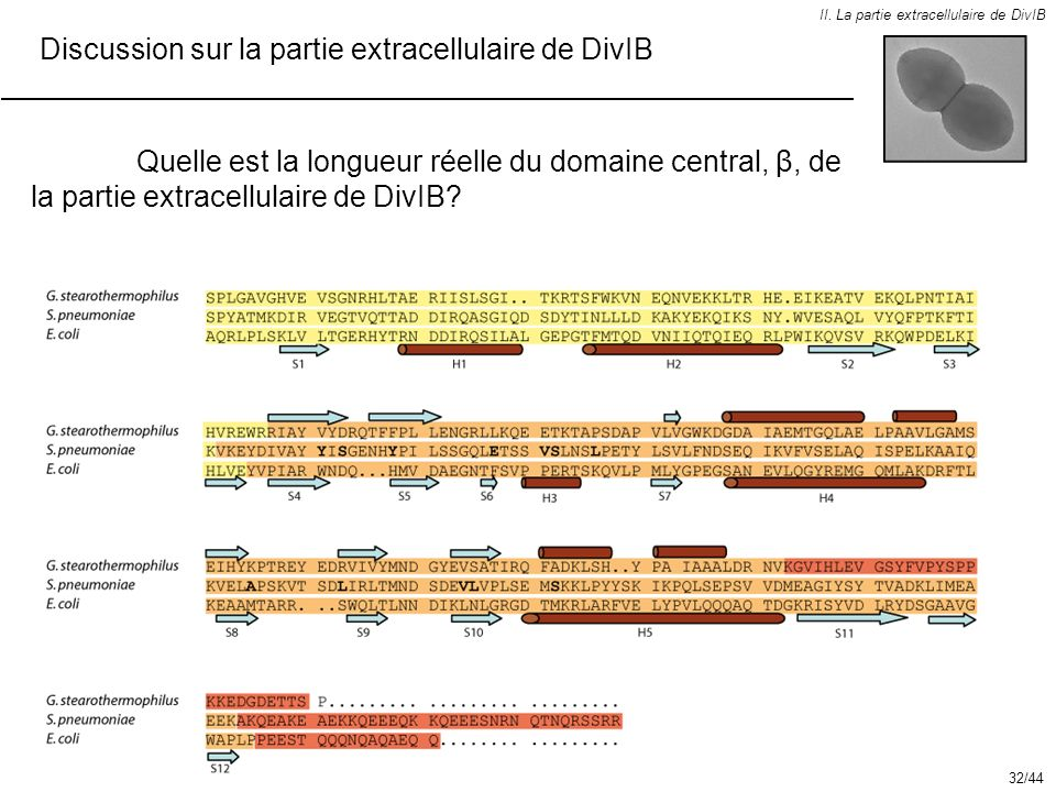 Discussion sur la partie extracellulaire de DivIB