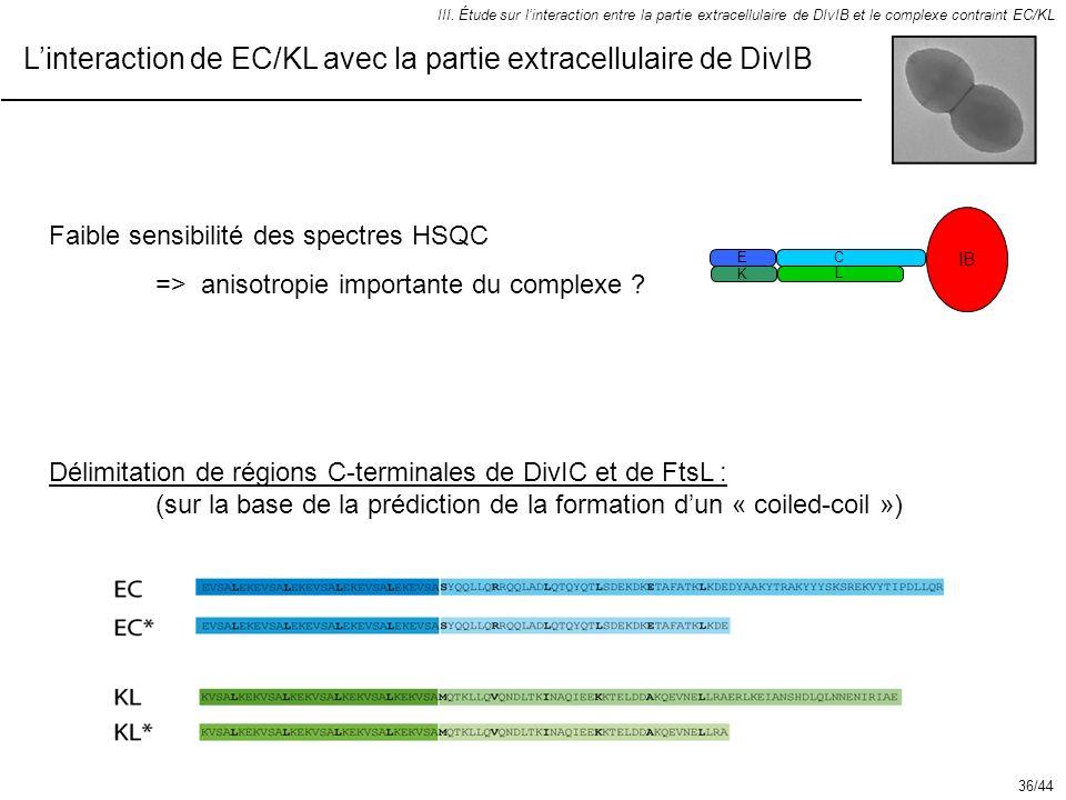 L'interaction de EC/KL avec la partie extracellulaire de DivIB