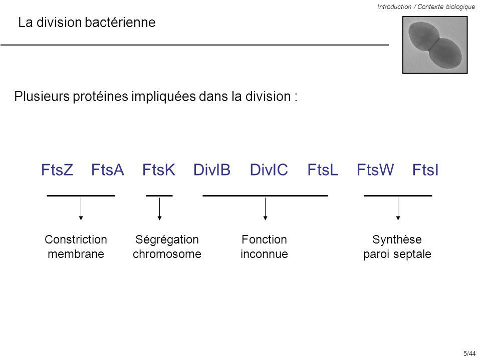 FtsZ FtsA FtsK DivIB DivIC FtsL FtsW FtsI La division bactérienne